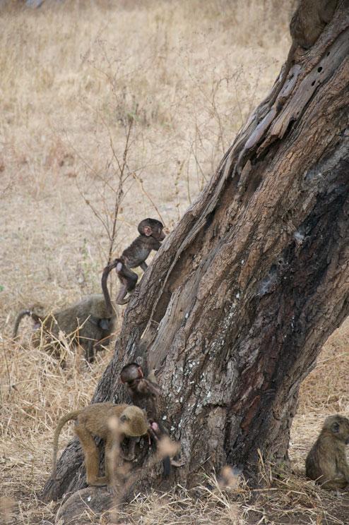 Serengetti, Tanzania