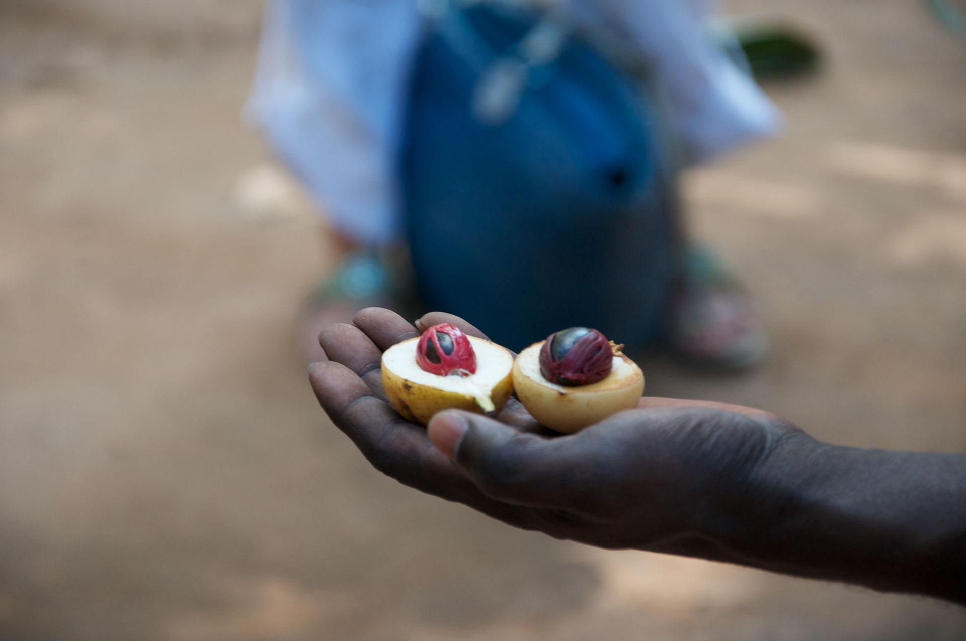 Cocoa - Zanzibar